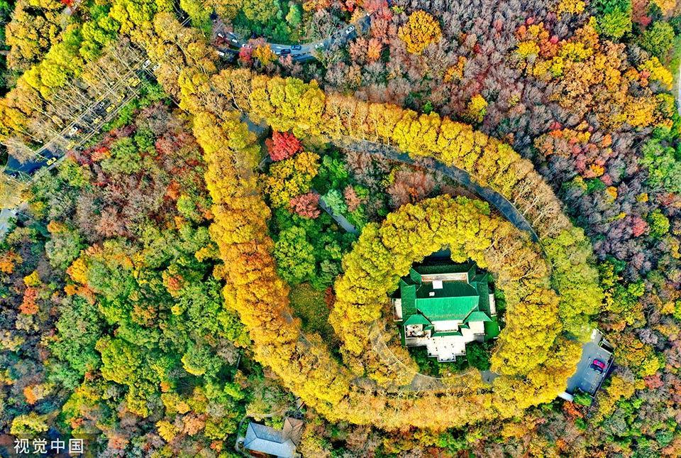 南京,航拍下的钟山风景区,层林尽染,展露出绝佳美景.