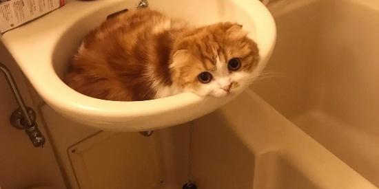 喵星人对于洗手池子的青睐,不是我们常人所能理解的。