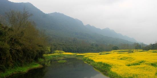 三月的春风、三月里被花朵染成金色的山村