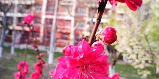 小眼睛大世界,老四手机摄影集:春日寻芳处,红梅