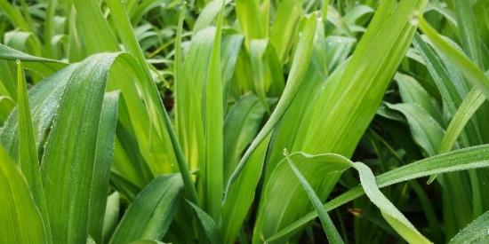 清晨看到这些花花草草,心情变得特别好