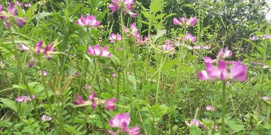 老家常见的几种植物,你能认出来几种