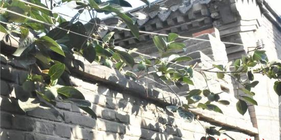 隐藏在美丽乡村中的那些百年老宅