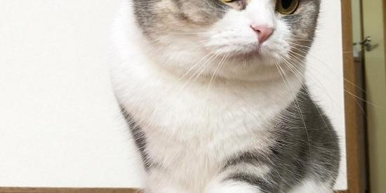 粉嫩萌Jio大象腿图集又来了,猫奴们跪舔吧!