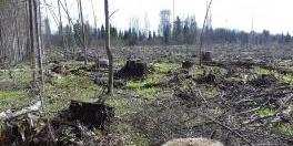 西伯利亚的森林