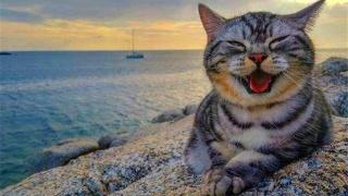 失聪老人在猫咪的帮助下,顺利横跨南大西洋