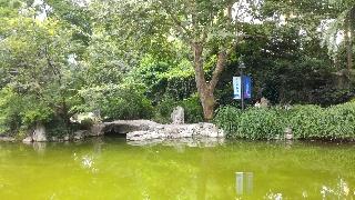 上海静安公园,在一片丛林里遥看金碧辉煌的
