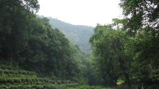 杭州,九溪十八涧(6)