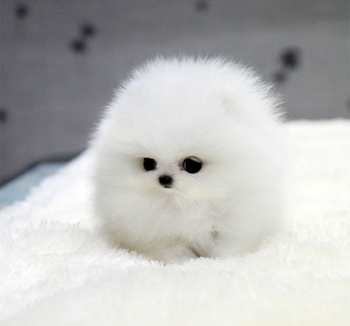 """世界上什么动物最可爱?""""圆形""""的动物最可爱"""