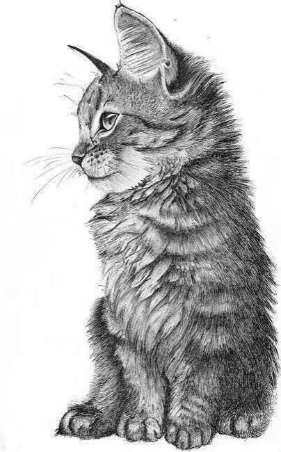 可爱猫咪的素面,太美了