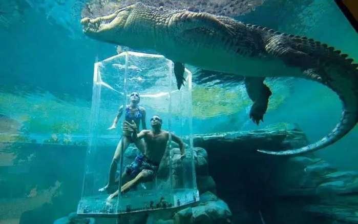 壁纸 海底 海底世界 海洋馆 水族馆 699_437