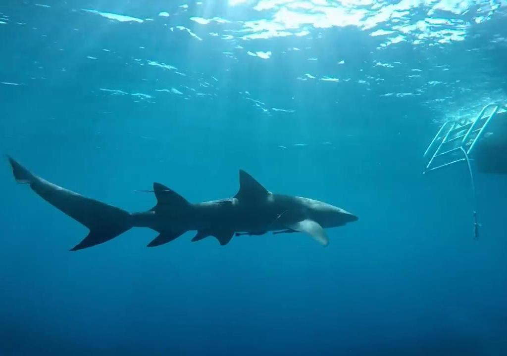 鲨血浴囹�a_美女下水挑逗鲨鱼,没想到引来血光之灾